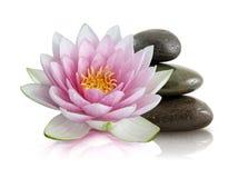 De bloem en de kiezelstenen van Lotus Stock Afbeelding