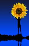 De bloem en de mens van de zon Stock Afbeelding