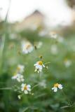 De bloem en de Zonsondergang van het gras Royalty-vrije Stock Afbeeldingen