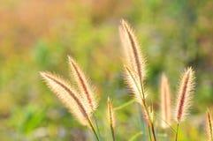 De bloem en het zonlicht van het gras royalty-vrije stock afbeeldingen