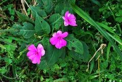 De bloem het bloeien mooie in de loop van de dag tijd stock foto