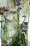 De bloem in ijs Stock Afbeelding