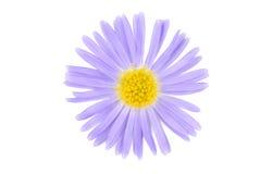 De bloem isoalted op wit Royalty-vrije Stock Afbeeldingen