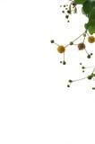 De bloem isoleert stock fotografie