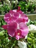 De bloem kijkt schoonheid royalty-vrije stock afbeeldingen