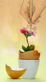 De bloem kwam binnen een eierschaal tot bloei Stock Foto