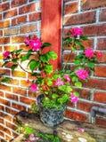 de bloem in mijn tuin, te geven gelieve dagelijks het water stock foto's