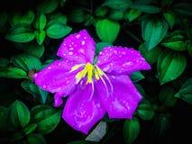 De bloem is mooi Royalty-vrije Stock Fotografie