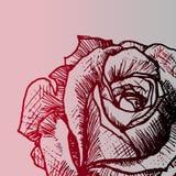De bloem nam - close-up, kleurenaffiche toe Stock Foto