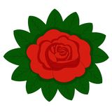 De bloem nam, rode knoppen en groene bladeren toe Geïsoleerdj op witte achtergrond Vector illustratie vector illustratie