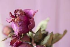 De bloem nam toe Stock Afbeeldingen