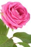 De bloem nam toe Stock Foto's