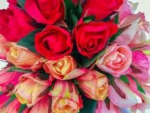De bloem, nam toe - bloei, kies bloem uit, nam de enige installatie, toe Stock Afbeeldingen