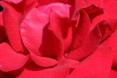 De bloem nam tuin nee produktion toe royalty-vrije stock foto's