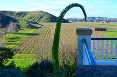 De bloem Nieuw Zeeland van agaveattenuata stock foto's