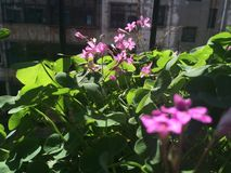De bloem onder de zon Stock Foto