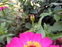 De bloem ontluikt nog het bloeien proces Babybloem royalty-vrije stock fotografie