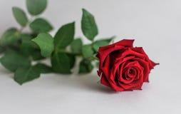De bloem op de achtergrond Royalty-vrije Stock Afbeeldingen