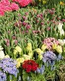 De bloem toont Royalty-vrije Stock Afbeeldingen
