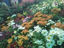De bloem toont Royalty-vrije Stock Foto's