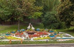 De bloem toont Landschapspark in Kiev Stock Foto's