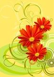 De bloem van Achtergrond gerbera ontwerp Stock Afbeeldingen