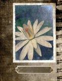 De bloem van Achtergrond grunge Prentbriefkaar Royalty-vrije Stock Foto