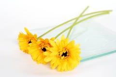 De bloem van Brithday Stock Afbeelding
