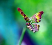 De bloem van Crocosmia Royalty-vrije Stock Afbeeldingen