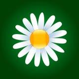 De bloem van Daisy royalty-vrije illustratie