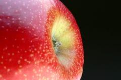 De bloem van de appel Royalty-vrije Stock Afbeeldingen