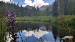 De bloem van de berg Stock Fotografie