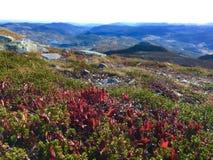 De bloem van de berg Royalty-vrije Stock Afbeelding