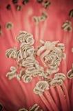 De bloem van de bloesem bombax ceiba van de kapok stock foto's