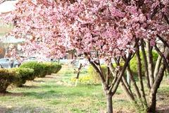 De bloem van de boom Stock Afbeelding