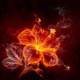 De bloem van de brand Stock Foto's