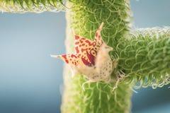 De Bloem van de cactus Royalty-vrije Stock Foto