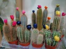 De Bloem van de cactus royalty-vrije stock afbeeldingen