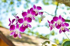 De bloem van de close-up het roze orchidee bloeien stock afbeeldingen