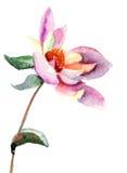 De bloem van de dahlia, waterverfillustratie Royalty-vrije Stock Fotografie