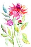 De bloem van de dahlia, waterverfillustratie Stock Fotografie