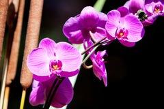 De bloem van de de kleurenorchidee van Fucshia stock afbeeldingen