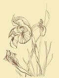 De bloem van de de tekeningsiris van de borstel Stock Foto's