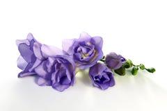De bloem van de fresia stock foto's