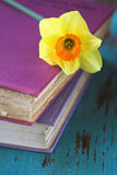 De bloem van de Gele narcis van de lente op roze boeken Stock Foto