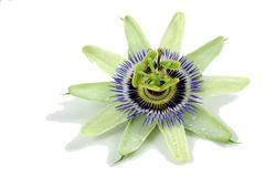 De bloem van de hartstocht Stock Foto's