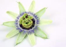 De bloem van de hartstocht Royalty-vrije Stock Fotografie