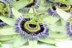 De bloem van de hartstocht Royalty-vrije Stock Afbeeldingen
