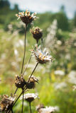 De bloem van de herfst stock afbeeldingen