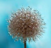 De bloem van de herfst Royalty-vrije Stock Afbeelding